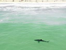 Check out these 'Friendlier' shark barrier designed by SA boffins