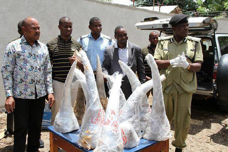 Chinese nationals get 20 years in jail for smuggling rhino horns - Africa Geographic | Ethics? Rules? Cheating? | Scoop.it