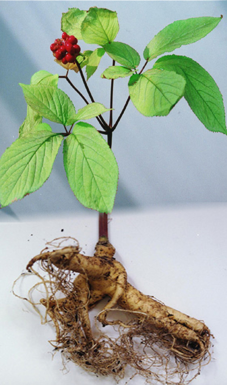 Ginseng for health care: a systematic review of randomized controlled trials in Korean literature. [PLoS One. 2013] - PubMed - NCBI | Vitae Herbae (herbal, natural, integrative medicine  & health) | Scoop.it