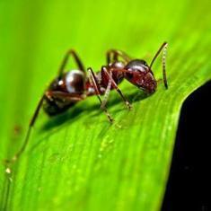 Infectious Selflessness: How an Ant Colony Becomes a Social Immune System | All About Ants | Scoop.it