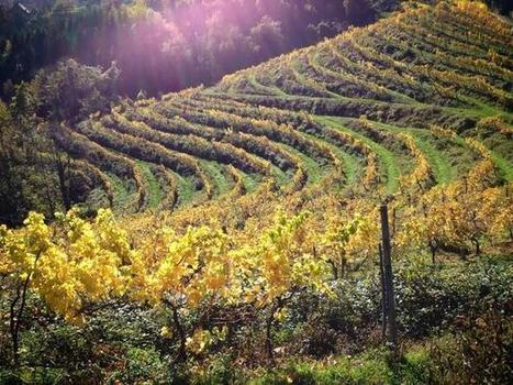 Rise of Slovenian and Croatian wine: Interview with a wine expert   Vitabella Wine Daily Gossip   Scoop.it