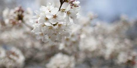 La France va interdire la vente de cerises traitées au diméthoate, un pesticide jugé cancérigène | Health & environment | Scoop.it