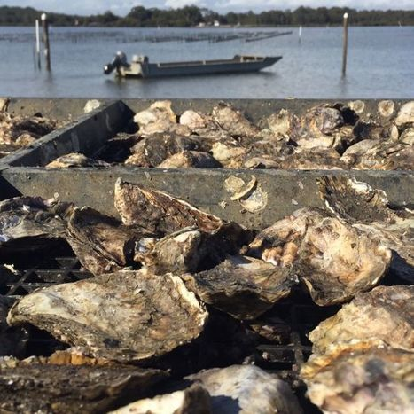 Fish poisoned by toxic chemicals from RAAF base 'can clean out their systems' | Aquaculture Directory | Scoop.it
