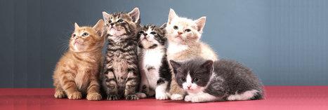 La cruauté animale a-t-elle sa place sur les réseaux sociaux ? - Fondation 30 Millions d'Amis | Veille Perso | Scoop.it