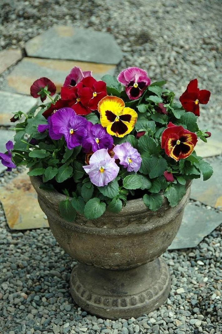Don't let your flowerpots remain empty this winter | Container Gardening | Scoop.it