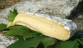 Le fromage objet de tensions diplomatiques | Industrie fromagère | Scoop.it