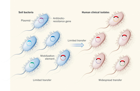 Microbiology: Barriers to the spread of resistance : Nature : Nature Publishing Group | Systems biology and bioinformatics | Scoop.it