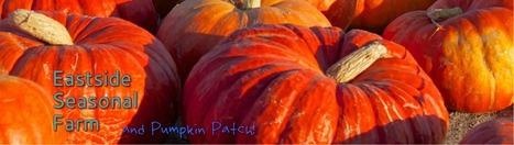 Harvesting family fun | EastSide Seasonal Farm & Pumpkin Patch | Scoop.it