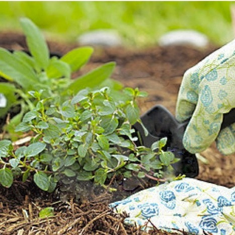 Gardener Soaps, Lotions And Hand Therapies | Gardening with Heirloom Plants | Scoop.it