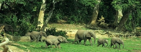 Elephants: Mega-Gardeners of the Forest Revealed in New BBC Earth Film | Sparkfire | Scoop.it
