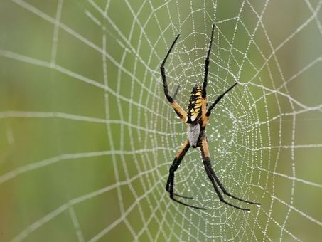 'Spider spree' hikes tonight, Friday at Nature Center - Springfield News-Leader | Spiders | Scoop.it