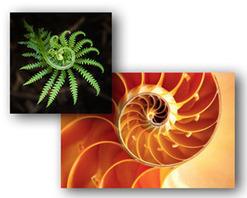 What Is An Upward Spiral?   Organizational Learning & Change   Organizational Development 2.0   Scoop.it