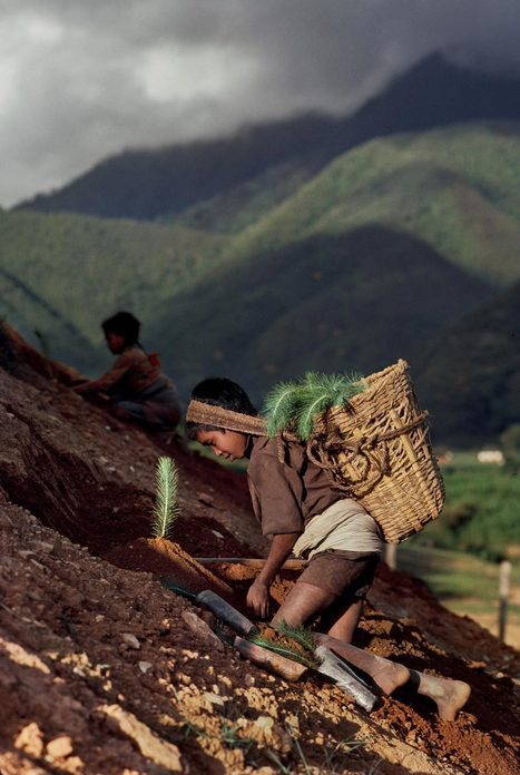 Child Labor | Photographer: Steve McCurry | Visual Journalism | Scoop.it