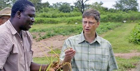 La Stratégie de Bill Gates pour mettre fin aux fruits et céréales naturelles en Afrique. | Afrique: développement durable et environnement | Scoop.it