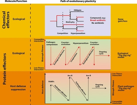 New Phytologist: Host–microbe and microbe–microbe interactions in the evolution of obligate plant parasitism | Plant and their microbe symbionts | Scoop.it