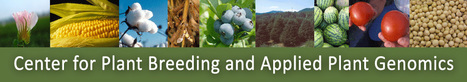 Plant Breeding educational resources from NCSU Center for Plant Breeding and Applied Plant Genomics | Plant Biology Teaching Resources (Higher Education) | Scoop.it