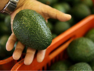 Aguacate, una alternativa en la cuesta de enero - Informador.com.mx | Aguacate: Persea  americana | Scoop.it