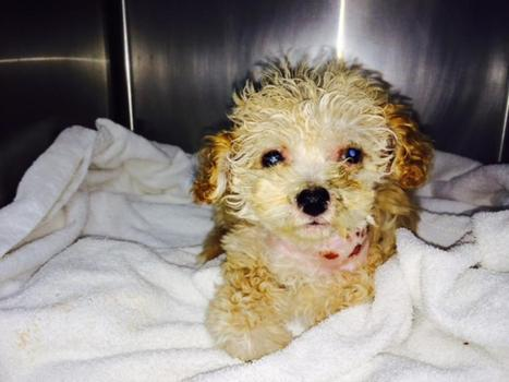 Puppy Found Among Bottles in Recycling Center | Parental Responsibility | Scoop.it