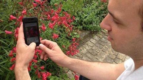 Pl@ntNet : l'équivalent de Shazam pour identifier les fleurs   Olfanessence   Scoop.it