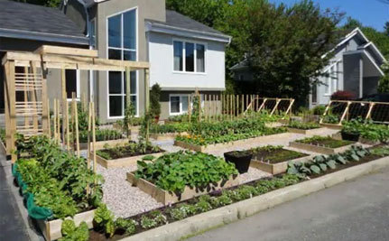 'Give Peas a Chance' Protest Saves Front Yard Vegetable Garden - Until Fall | Wholesome Food Association | Scoop.it