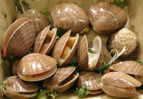 Here are the Health Benefits of Clams | Its All About Seafood | Scoop.it
