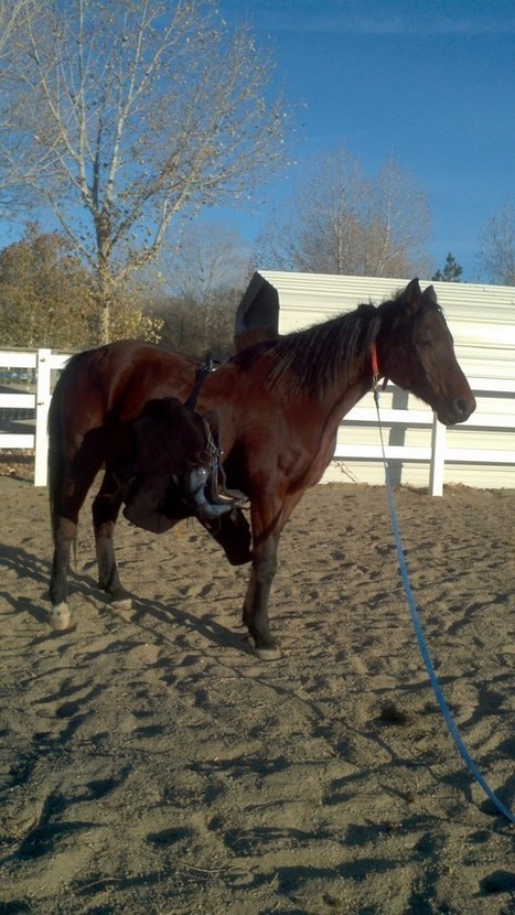 Endurance Horse Training Basics: Saddle Slipping | Karen's ... | Endurance and Competitive Trail Riding | Scoop.it