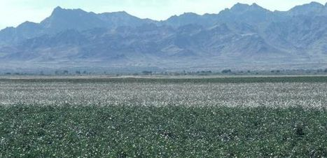 Scientists Discover Genetic Basis of Pest Resistance to Biotech Cotton | UANews | CALS in the News | Scoop.it