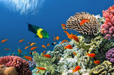 Want To Save Coral Reefs? First, Save The Fish | ThinkProgress | All about water, the oceans, environmental issues | Scoop.it