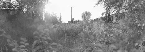 Entrevue avec un naturaliste urbain (partie2) | Végétalisation des espaces urbains | Scoop.it