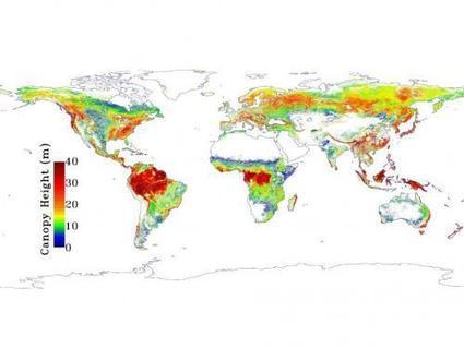 NASA map sees Earth's trees in a new light | Cultural Worldviews | Scoop.it