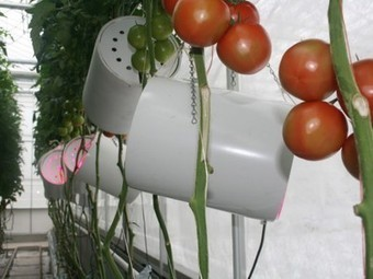 Want healthier tomatoes? Grow 'em with LEDs | Vertical Farm - Food Factory | Scoop.it
