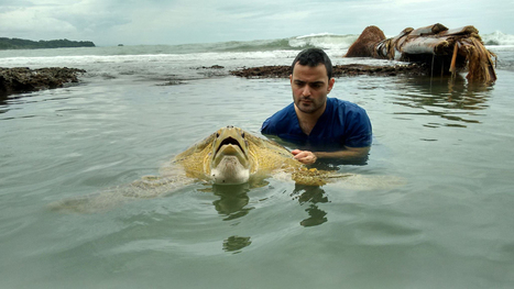 Costa Rican police rescue second sea turtle from butcher this month - | All about water, the oceans, environmental issues | Scoop.it