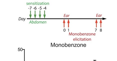 Do innate NK cells truly show memory-like response to antigens? Monobenzone [hapten] study | NIHilist's Immunology | immunology | Scoop.it