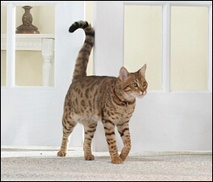 The Tales the Cat Tail Tells: Adult Cat Care | Hill's Pet | Kathleen H third hour | Scoop.it