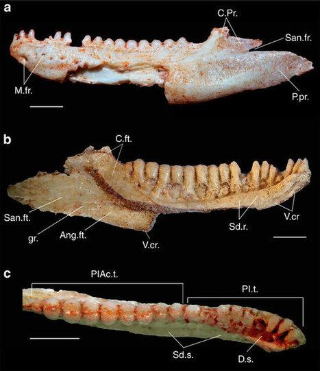 BRESIL. Un fossile de lézard de 80 millions d'années rebat les cartes de l'évolution des sauriens | Aux origines | Scoop.it