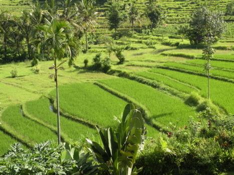 Indonésie : Gili, Lombok... il n'y a pas que Bali ! | Bali, Java,  (Indonésie),  Malaisie | Scoop.it