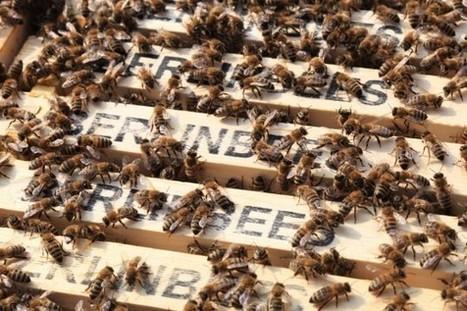 In drei Schritten zum Bienenretter! « Lilli Green® - Magazin für ...   Bienen   Scoop.it