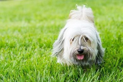 Q Lawns - Lawn Blog - How to stop your dog destroying your lawn - Q Lawns | Gardening | Scoop.it