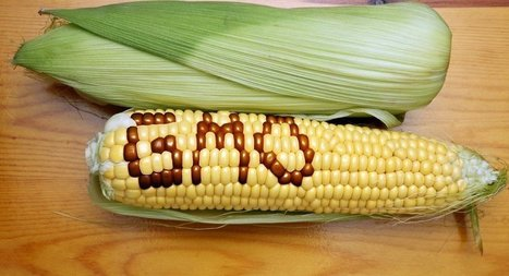 Say No to GMO: Russia Ends Production of Genetically Modified Food | Food issues | Scoop.it