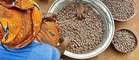 Afrique - Agriculture : pourquoi le secteur des semences est inefficace - Le Point Afrique | Intelligence économique, collective et compétitive, ici et ailleurs | Scoop.it