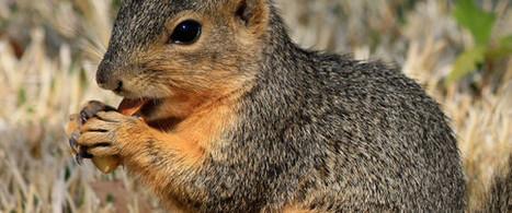 Filature pour avoir nourri des écureuils: il voulait protéger nos droits | interfarces | Scoop.it