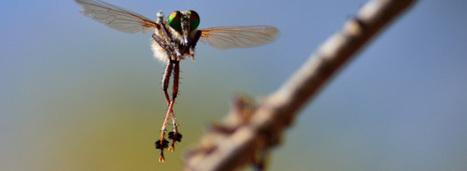 Les données des études d'impact sur la biodiversité seront bientôt en libre accès | Revue de presse écologiste | Scoop.it