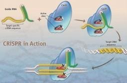 ArgumentsaboutCRISPRtechnology:ARevolutionofScience | CD Genomics Blog | genome editing | Scoop.it