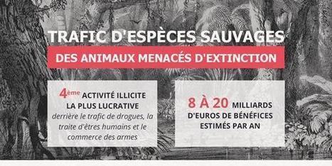 Lutte contre le trafic d'espèces sauvages. | SES-BANK | Scoop.it