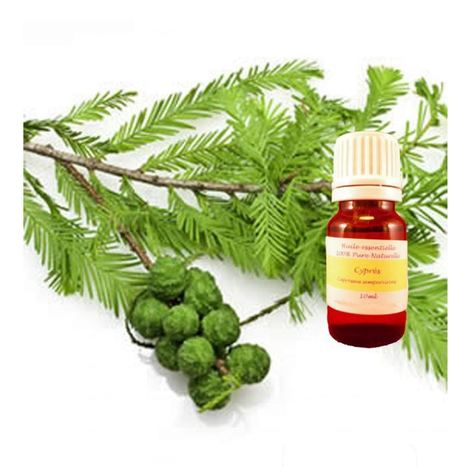 Huile essentielle de cyprès : Une huile polyvalente | Huiles essentielles et remèdes naturels | Scoop.it
