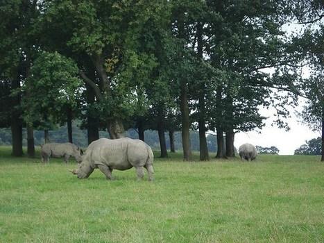 New reality TV series follows the heroic rangers who fight rhino ... | Rhino poaching | Scoop.it