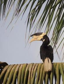 Wildlife Extra News - Climate change threatening Asian birds   birding   Scoop.it