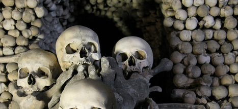 In the Future, Our Cities Could Be Made of Bone | Living History | Scoop.it