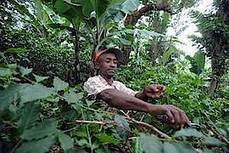 World Forestry Congress sets out vision for future of forests | Ecosystèmes Tropicaux | Scoop.it