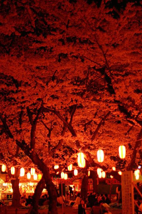 Beautiful Japan Photography | Abduzeedo | Graphic Design ... | Picture This. | Scoop.it